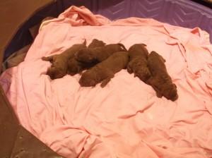 Annie Pups 7-17-16